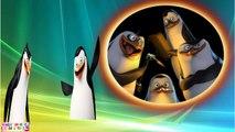 THE PENGUINS OF MADAGASCAR Finger Family Rhymes   Finger Family The Penguin Of Madagascar