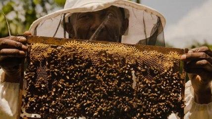 Jamaica Bees