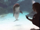 Cette fille a réussi à faire rire ce dauphin, trop mignon !