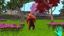 Mega Gummy Bear crying by injected Finger Family Song Nursery Rhymes Gummy Cartoon for Kid