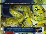 Saksi: 100+ endangered reptiles na   ipinuslit at nasabat sa HK, naibalik na sa PHL