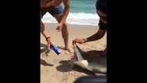 Un jeune complètement débile utilise les dents d'un requin pour ouvrir sa bière !