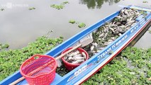 VnExpress | Thời sự | Cá chết trắng hồ thủy lợi ở Bình Dương