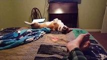 Quand ton chien tombe du lit comme une merde.. Le pauvre