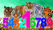 Tiger Cartoon 123 Songs For Children | Tiger 123 Numbers For Kids | 123 Children Nursery Rhymes