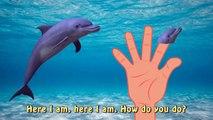 Sea Animal Finger Family Nursery Rhyme - Whale Orca Killer Whale dolphin octopus Daddy Fin