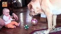 Labrador Dog and Baby - Labrador perro y bebé