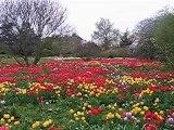 Flower paradise in Weinheim / Baden-Württemberg / Germany