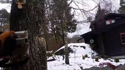 Ce bucheron utilise une technique incroyable pour abattre un arbre dans une zone trè risquພ!