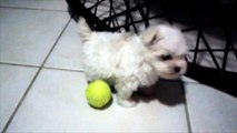 00:0302:38        00:34 Egy ártatlan kis kutyus