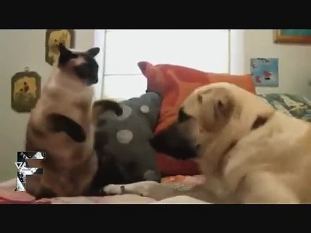 Funny clips smile because of the dog with the cat