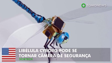 Libélula cyborg pode se tornar câmera de segurança.