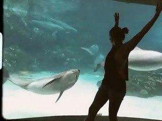 Elle fait la roue devant un dauphin et celui-ci est subjugué...