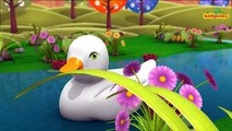 Baby Bao panda | five little ducks went swimming one day | baby songs | 3d rhymes