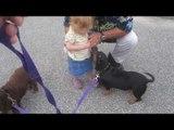 Chó và Em Bé Chơi Đùa Trên Đường Phố Rất Đáng Yêu Hài Hước.