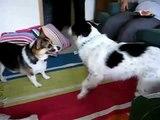 Chó Cắn Nhau Hai Con Cho Can Nhau Hung Dữ Chó Cắn Nhau Sủa Gâu Gâu