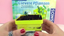 Clever Plants from Kosmos - Planting peas - Can plants smell water? -demo