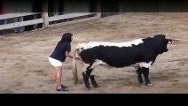 Girl makes bull in calm