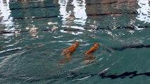 Belle performance pour les montoises au championnat francophone cadettes de nage synchro.Vidéo Eric Ghislain