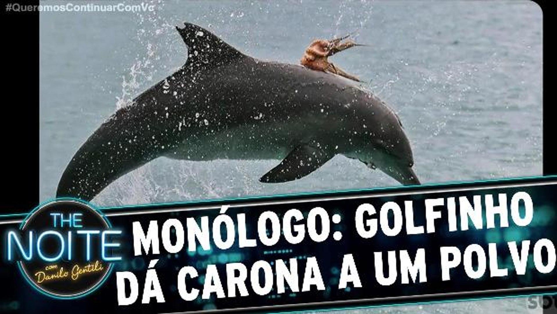 Monólogo: Golfinho dá uma carona para um polvo