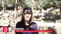 Trois nouveaux oursons au Parc des Pyrénées