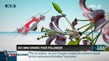 La chronique d'Anthony Morel : Des mini drones pollinisateurs qui viennent en aide aux abeilles - 31/03