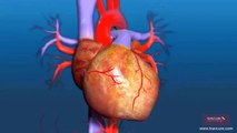 What is the Process of Aortic Valve Replacement Surgery?   SurgeryLog