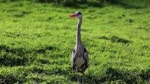 VIDEO. Top du tourisme 2017 : Les Oiseaux du Marais poitevin à St Hilaire-la-Palud