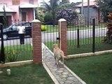 Kater kommt nach nach Hause - und sein Hunde Freund kann es nicht glauben