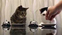 L'une des vidéos les plus virales de la semaine : ces deux chats tapent sur la sonnette pour avoir des croquettes