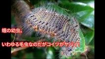 【閲覧注意】日本で身近にいる最も危険な恐ろしい生物10選。遭遇したらマジでヤバイことが・・・地球上に存在する遭遇したらマジでヤバすぎる虫たち!ガチで逃げ出したくなる【危険】