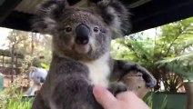 Dire « Bonjour » à des animaux australiens