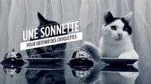 Des chats utilisent une sonnette pour obtenir des croquettes