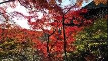 【作業用BGM】日本の音楽・和風なBGM(正月から聞きたい音楽) Music of Japan《高音質》 part 1/4