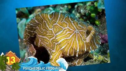 14 Weird Sea Discoveries