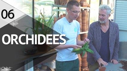 Visite dans la Serre aux Orchidées -  ÉPISODE 6