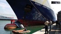 Le 18:18 : mobilisation générale pour sauver baleines et dauphins en Méditerranée