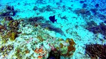 Cozumel Mexico Diving Palancar Reef Fish