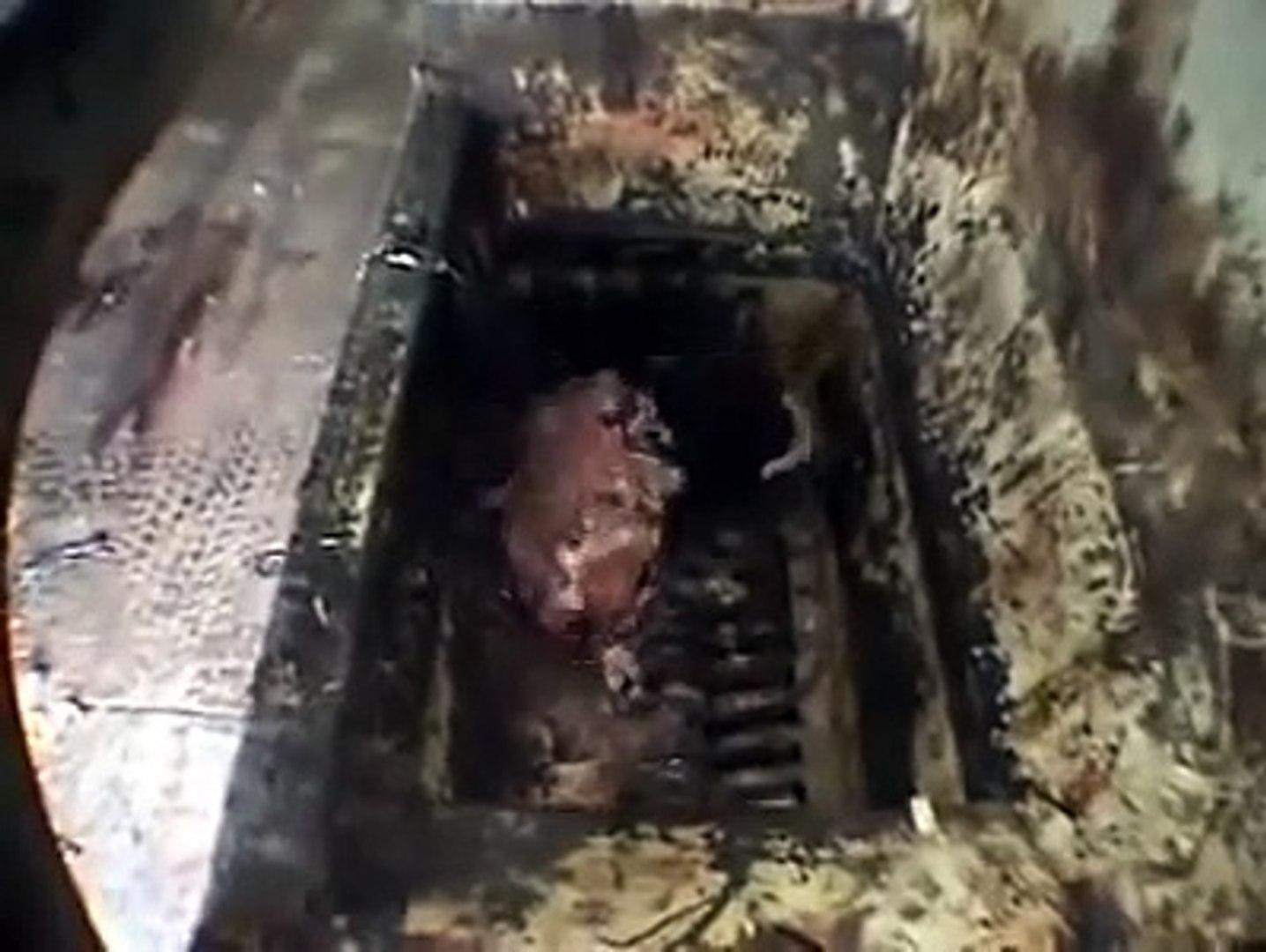 maquina de moer animais