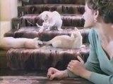 Les branleurs ses chats.