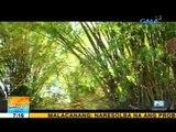 The many other uses of bamboo | Unang Hirit