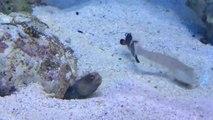 Un poisson se fait troller par un autre