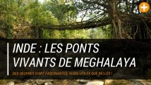 Inde : les ponts vivants de Meghalaya