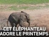 Un éléphanteau découvre son habitat !