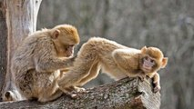 Monkey Throws Poop and Other Funny Animals Caught on Tape _Funny Animals_ Funny Pet Videos