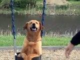 Papa place sa chienne sur la balançoire. Et ensuite ? J'ai éclaté de rire en découvrant la réaction de la chienne ! REGA