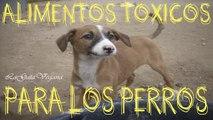 ALIMENTOS TOXICOS PARA LOS PERROS / LOS ALIMENTOS QUE NO SE LE DEBEN DAR A LOS PERROS