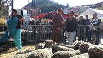 Alpes-de-Haute-Provence : les paysans réunis à Digne-les-Bains pour la fête de l'Agneau Pascal
