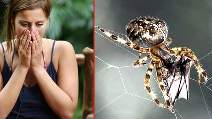 Spiders Can Eat The Human Race In One Year