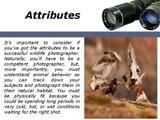 Tony Henrik Halttunen Requirements for Wildlife Photographer Career